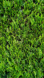 Green plant fence vertical Stock Images