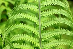 Green, Plant, Fern, Forest Stock Photo