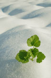 Green plant on field stock photography