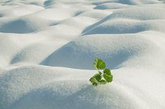 Green plant on field royalty free stock photos