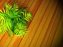 A green plant on the floor Stock Photography