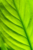 Green plant floral background. Vibrant green plant leaf texture, nature background Royalty Free Stock Photos