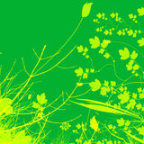 Green Plant and Flower Illustration Design Stock Photos