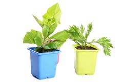 Green plant in a flower pot Royalty Free Stock Images