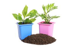 Green plant in a flower pot Stock Images