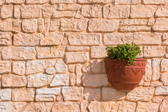 Green plant in flower pot hanging on old brick wall. Stock Photography