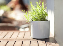 Green plant in flower pot on street cafe table Stock Photos
