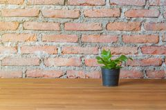 Green plant in the flowerpot on wood table with brick background.  Stock Photography