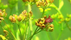 Green Plant and Flying Insect Stock Photography