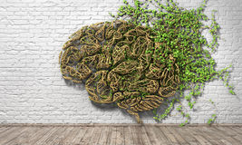 The green plant in form of human brain on a white brick wall background and wood floor. Stock Photo