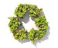 The green plant in form of recycling symbol Royalty Free Stock Image