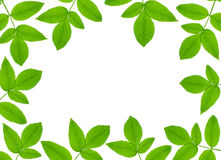 Green plant frame Royalty Free Stock Photography
