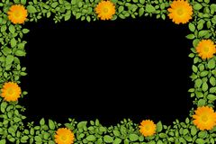 Green plant frame with flowers Royalty Free Stock Photo
