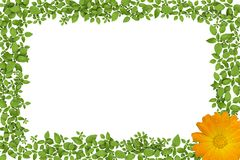 Green plant frame with yellow flowers Royalty Free Stock Photo