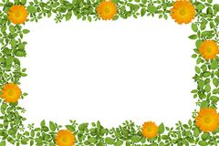 Green plant frame with yellow flowers Stock Photo
