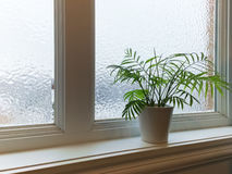Green plant and frosted window Royalty Free Stock Image