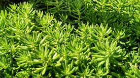 Green. Green plant garden Royalty Free Stock Images