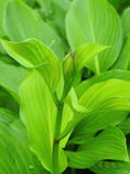 Green plant in garden Royalty Free Stock Photography