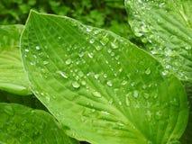 Green plant in garden in dew Stock Image