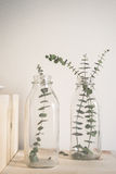Green Plant in Glass Ajr Royalty Free Stock Photography
