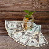 Green plant in glass jar with loose change (Russian rubles) and dollars Royalty Free Stock Image