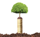 Green plant on  gold coins Royalty Free Stock Photo