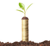 Green plant on  gold coins Stock Photos