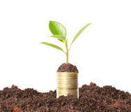 Green plant on  gold coins Stock Image