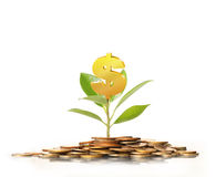 Green plant on  gold coins Stock Photo