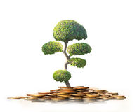 Green plant on  gold coins Royalty Free Stock Photography