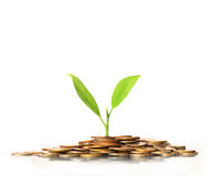 Green plant on  gold coins Stock Photography