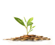 Green plant on  gold coins Stock Images