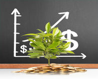 Green plant on  gold coins Royalty Free Stock Image