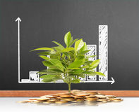 Green plant on  gold coins Royalty Free Stock Images