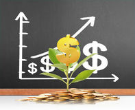 Green plant on  gold coins Royalty Free Stock Photos