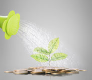 Green plant on the gold coins Stock Image