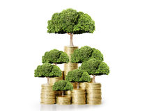 Green plant on the gold coins Stock Photography