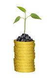 Green plant on gold coins stack Royalty Free Stock Photography