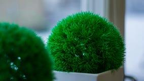 Green, Plant, Grass, Houseplant stock photo