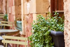 Green plant in a flower pot outside on a windowsill against a wall background. Green plant in a gray flower pot outside on a windowsill against a pink wall Stock Image