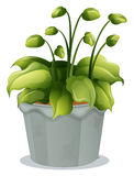 A green plant in a gray pot. Illustration of a green plant in a gray pot on a white background Stock Image