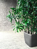 Green plant in a gray room with brick wall Royalty Free Stock Photo