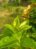 Golden morning and green environment. Joy with nature. Green plant in a great Golden sun shine morning stock photography