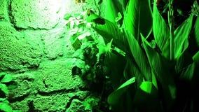 Green plant, green light Stock Photos