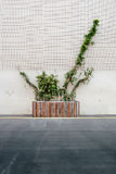 Green Plant in Grey and Brown Concrete Rectangular Cement Stock Image