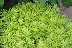 Green plant groups. Close up green plant groups royalty free stock photo