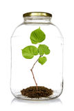 Green plant grow inside  glass jar Stock Photo