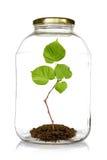 Green plant grow inside glass jar stock photo