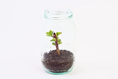 Green plant grow inside glass jar Royalty Free Stock Images