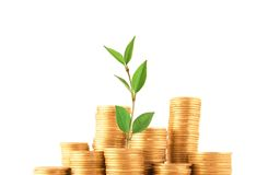 Green plant grow up in golden coins Royalty Free Stock Photo
